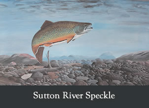 sutton river speckle
